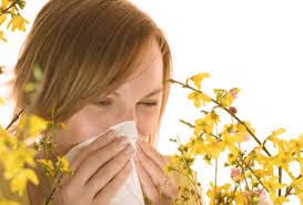 alergie la vara